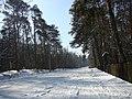 Koniec zimy w połowie marca - Wolica las - 10 - panoramio.jpg
