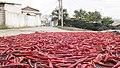 Korean chillies drying.jpg