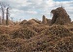 Kudzu graveyard (51748).jpg