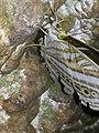 Kupu - kupu 4.jpg