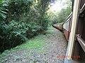 Kuranda QLD 4881, Australia - panoramio (29).jpg