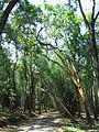Kuruva Island - Road to Kuruva Island1.jpg