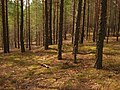 Līksna Parish, LV-5456, Latvia - panoramio - alinco fan (6).jpg