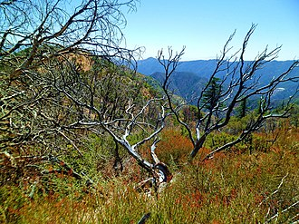 Angeles National Forest - 2014, new growth emerges after the fires of 2012