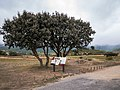 Laguardia - Dolmen El Sotillo 01.jpg