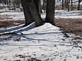 Lake Poinsett State Park Harrisburg AR 2014-03-08 002.jpg