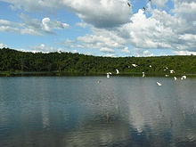 Lake with forest in background and flying white waterbirds