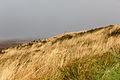 Lande sur le versant sud du Mont Saint-Michel de Brasparts, Saint-Rivoal, France.jpg