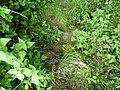 Landschaftsschutzgebiet Horstmanns Holz Melle -Waldrand- Datei 3.jpg