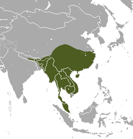 Large Indian Civet area.png