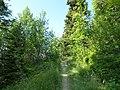 Le sentier du chard du beurre - panoramio (2).jpg
