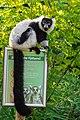 Lemur (26245153189).jpg