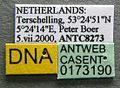 Leptothorax muscorum casent0173190 label 1.jpg