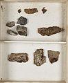 Lichenes Helvetici III IV 1842 023.jpg