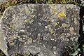 Lichens (39718345805).jpg