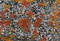 Lichens - Flickr - S. Rae.jpg