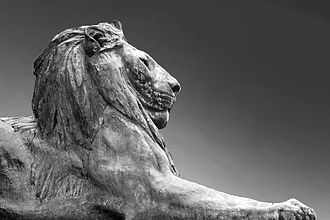Rhodes Memorial - A black and white photograph of one of the eight lions that flank the stairs at Rhodes Memorial.