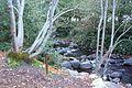 Lithia Park - Ashland, Oregon - DSC02677.JPG