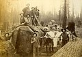 Loggers with crosscut saw and oxen standing near a large fir log, Washington, circa 1889-1891 (BOYD+BRAAS 120).jpg