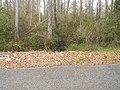 Lost Lake Recreation Area stream.jpg