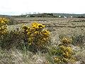 Low moorland, Carricknagat - geograph.org.uk - 436740.jpg