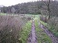 Lower Meadow Lane, Errigle - geograph.org.uk - 1058911.jpg