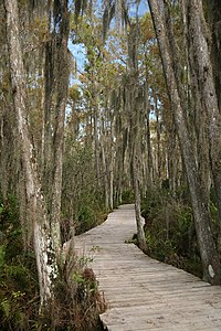 Loxahatchee boardwalk.jpg