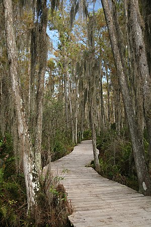 Loxahatchee National Wildlife Refuge - Boardwalk through the Loxahatchee swamp.