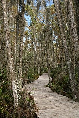 Loxahatchee National Wildlife Refuge - Boardwalk through the Loxahatchee swamp.
