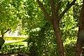 MADRID E.U.S. PALACIO MINISTERIO DE AGRICULTURA-JARDIN - panoramio (2).jpg
