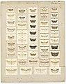 MA I437619 TePapa Plate-XX-The-butterflies full.jpg