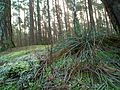 MOs810 WG 2017 2 (Notec Polder) (Notec Forest, Sowia Gora II).jpg