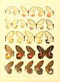Macrolepidoptera15seit 0093.jpg