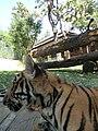 Mae Raem, Mae Rim District, Chiang Mai 50180, Thailand - panoramio (1).jpg