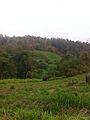 Mahout and his elphant Patara Elephant Farm.jpg