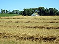 Make Hay While Sun Shines - panoramio.jpg