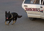 Man's best friend, on and off the battle field 130619-F-ZB149-428.jpg