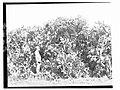 Man standing next to Prickly Pear bush(GN04220).jpg