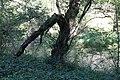 Mangfall bei der Bruckmuehle Weyarn-Valley-11.jpg