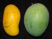 Mango ATAULFO GOLD NUGGET Asit.jpg
