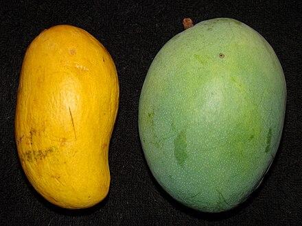 Hatcher Mango Wikivisually