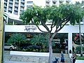 Marriott Waikiki Beach - panoramio.jpg