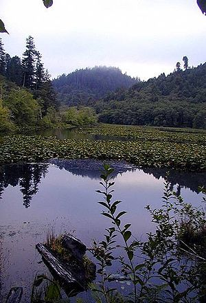 Del Norte County, California - Marshall Pond near the Klamath River, Redwood National and State Parks.