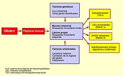 diagrama de fisiopatología de la enfermedad celíaca de la diabetes