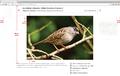 MediaViewer Sept9 imageSpec.png