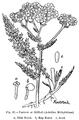 Medicinal Herbs Poisonous Plants-151-87.png