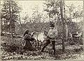 Melking av reinsdyr - milking reindeer (19306843299).jpg