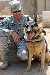 Military Working Dogs training in Baghdad, Iraq DVIDS173834.jpg
