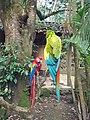 Military macaw (1) (26030077177).jpg