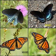 Mimicry in Nature (3172759556).jpg